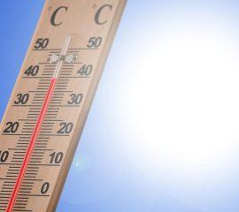 Neue Hitzewelle lässt die Waldbrandgefahr wieder ansteigen